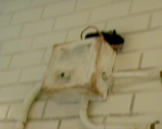 03變電箱上的老鼠